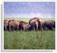 Elephant Group - Periyar National Park